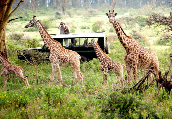 "Mara Naboisho was the first wildlife conservancy, an ""early adopter"" of global sustainable tourism criteria for destinations."
